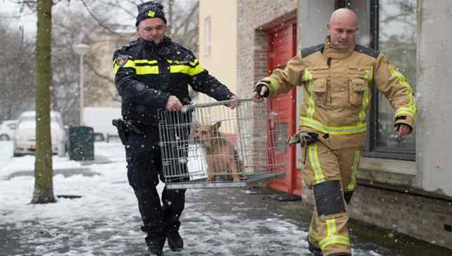 Holanda sem cães de rua
