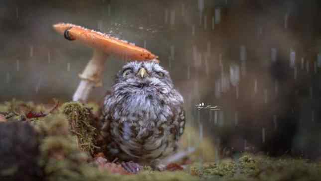 foto passarinho com guarda chuva