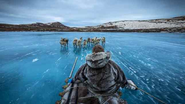 linda imagem no gelo
