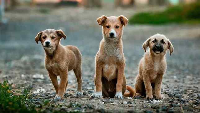 Aplicativos ajudam a encontrar lares para cães abandonados