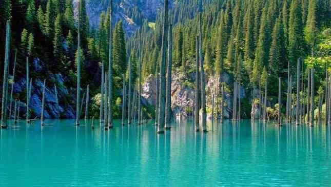 Floresta submersa do Lago Kaindy