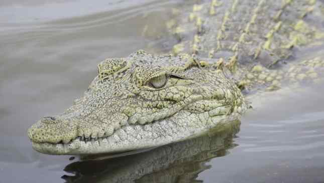 coisas que você não deve pesquisar no Google Imagens Krokodile drug