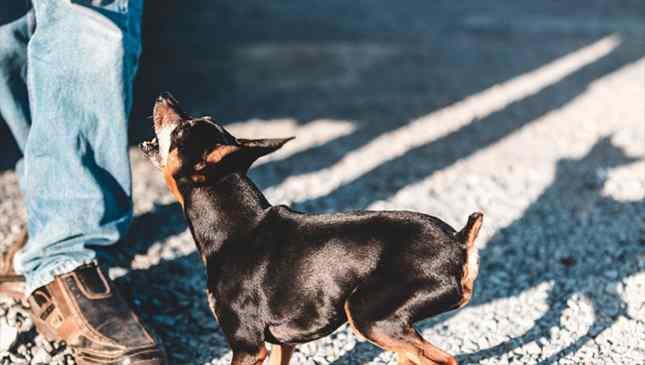 Cachorros e sentimentos
