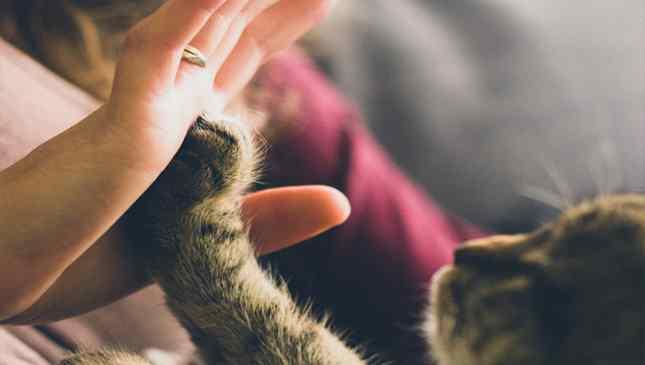 Gato salvou donos