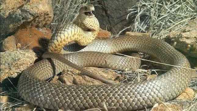 Maiores cobras do mundo - confira o Top 10 assustador