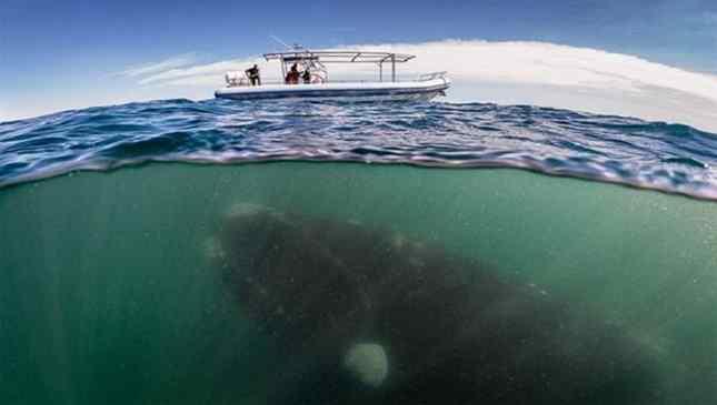 fobia do mar aberto