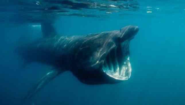 fobia do mar