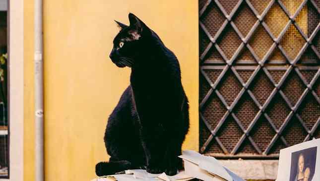 Gato preto não dá azar