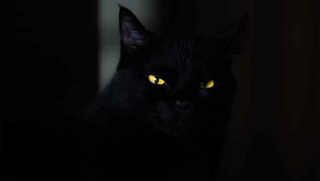 Gatos pretos rendem ótimas fotos