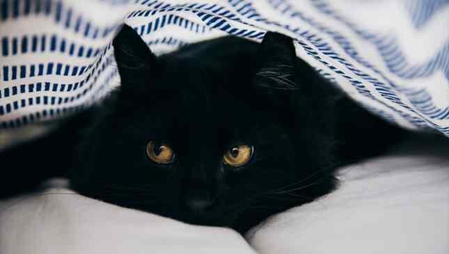 gato preto foto