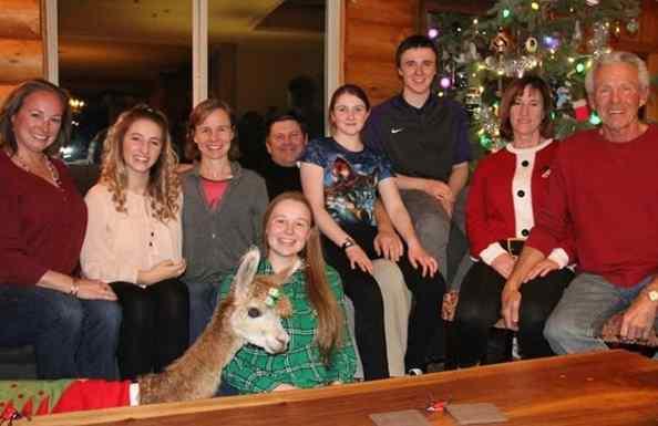 alpacas fofas em família
