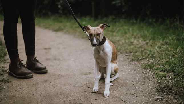 Cães podem espelhar estresse humano