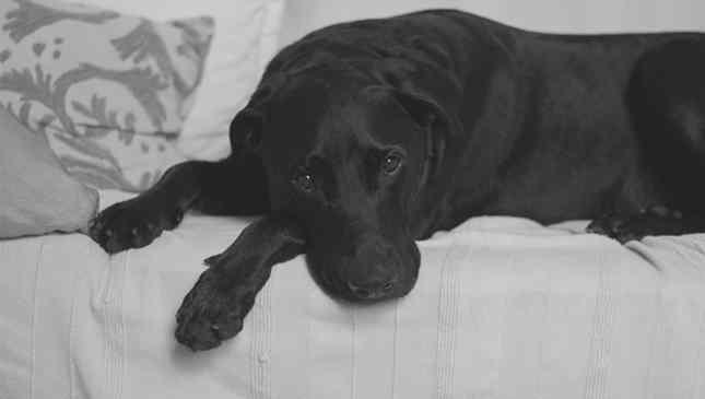 Cães também ficam preocupados com problemas do dia antes de dormir