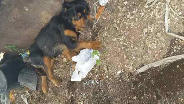Cadela usada para reprodução foi descartada por não servir mais