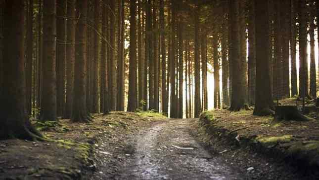 Corra para a floresta