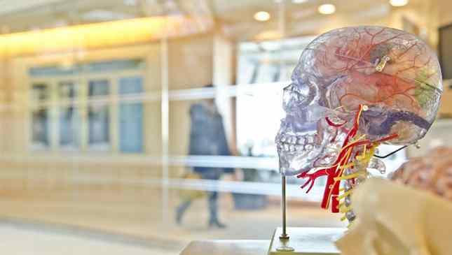 Estudos sobre Parkinson