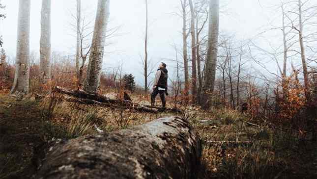 Fuja da selva de pedra