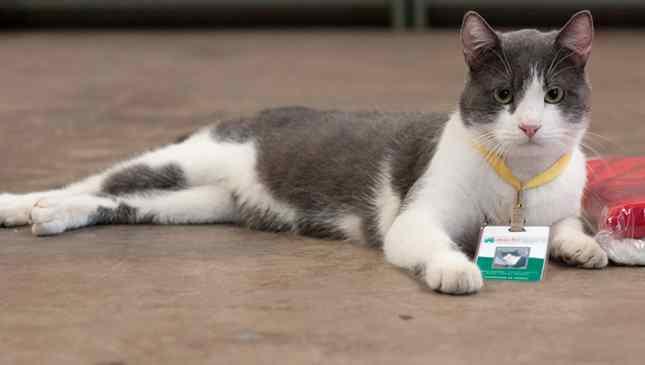 Gato adotado em loja