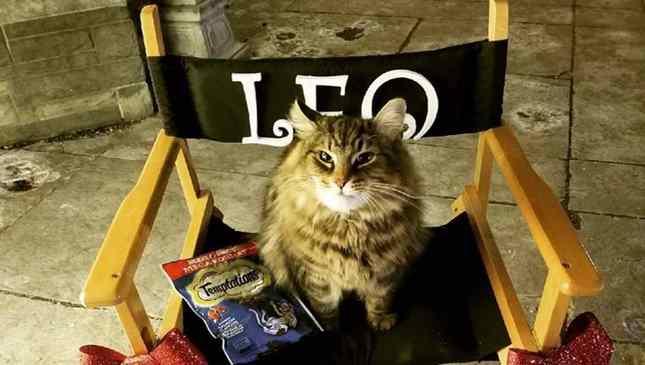 Leo era uma celebridade animal