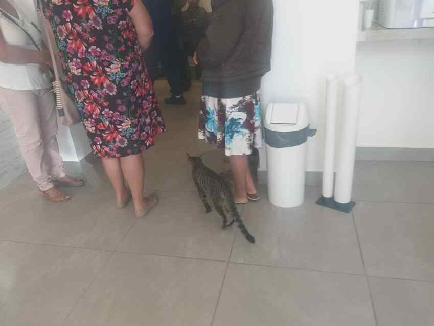 Gato acompanhou velório da dona