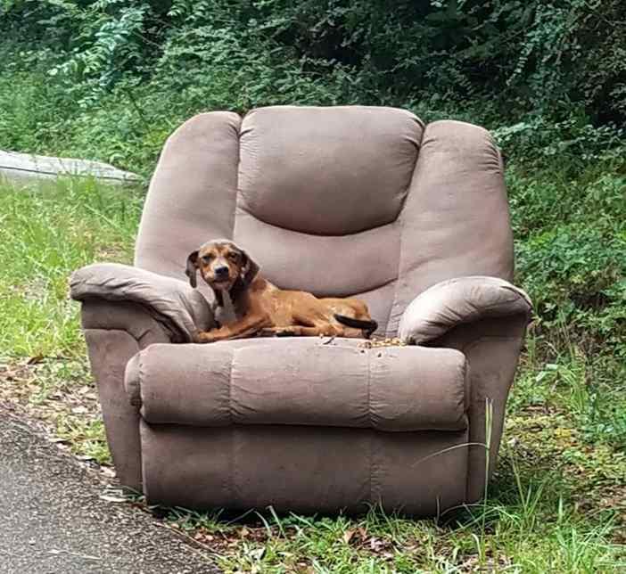 cão abandonado em estrada