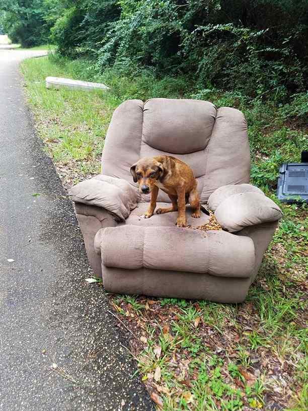 cãozinho abandonado em estrada