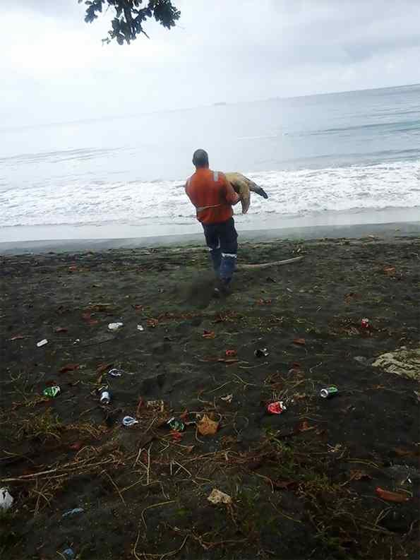 homem salva tartarugas