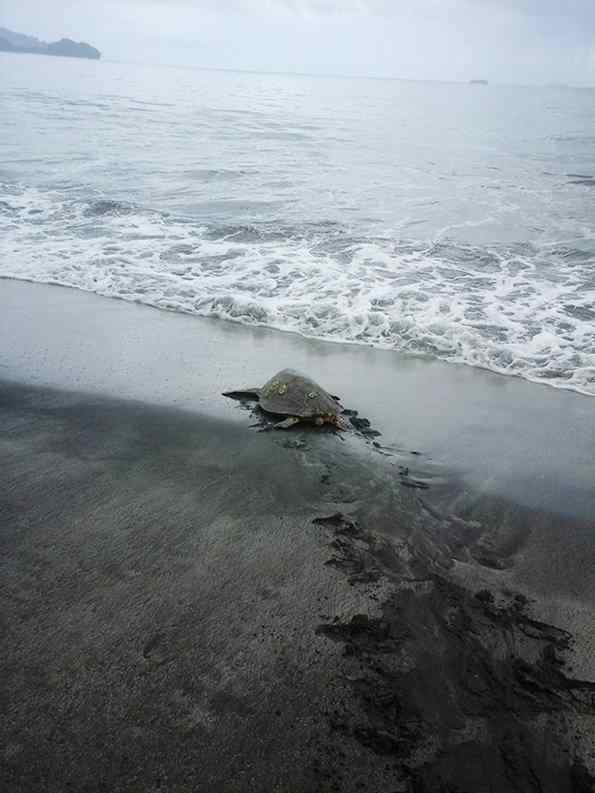 tartarugas foram devolvidas ao mar