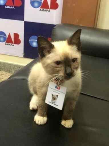 gato contratado pela oab