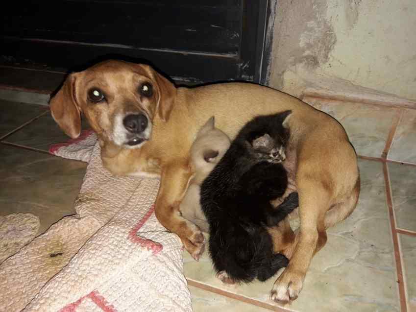 cadela com gatinhos