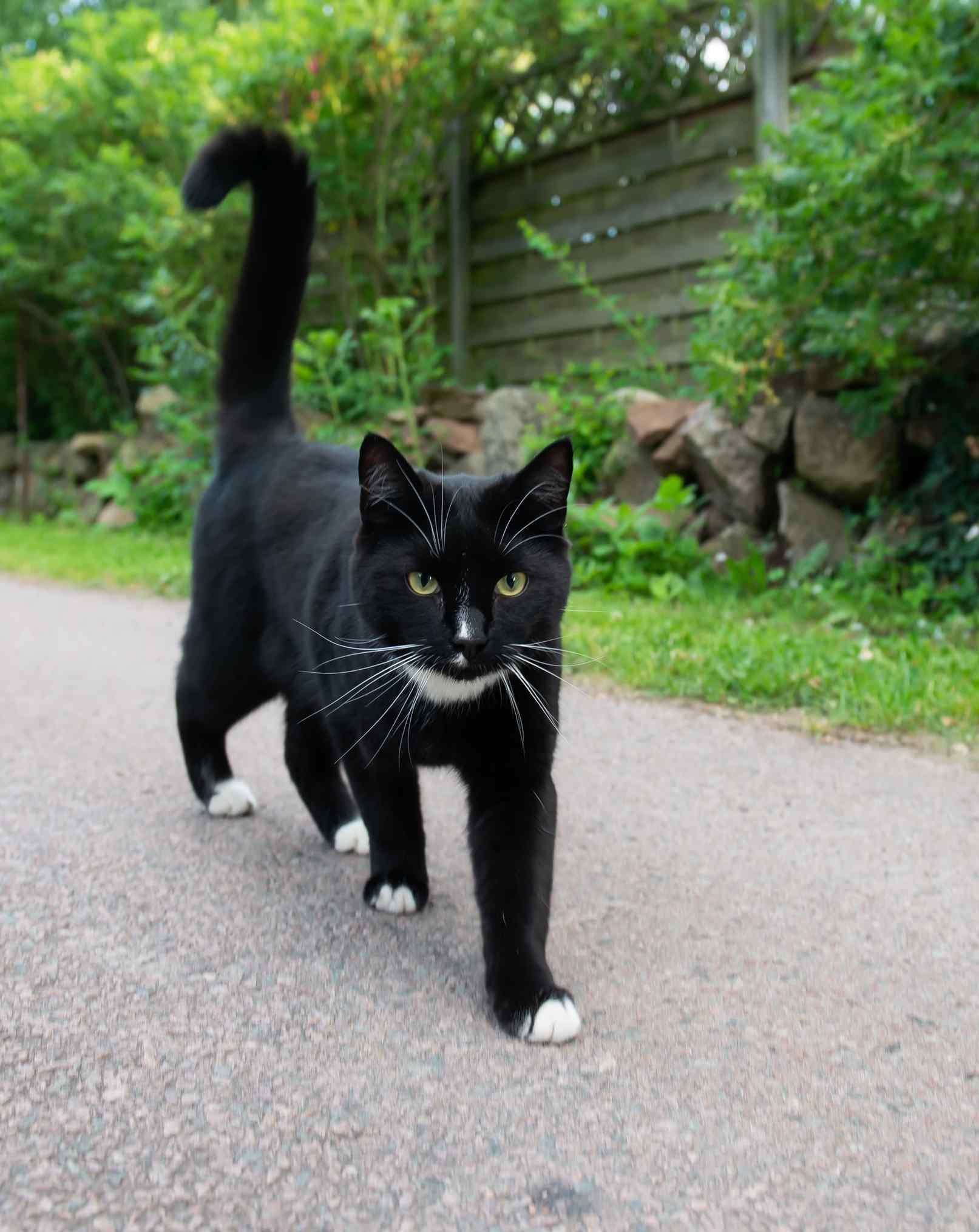 gatos pretos não dão azar
