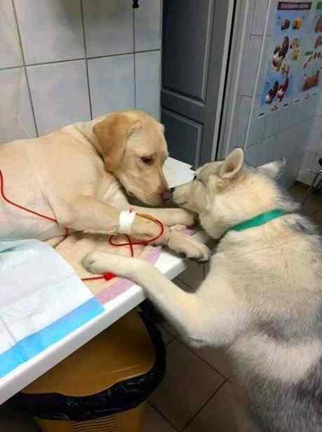 Cão consola outro cão