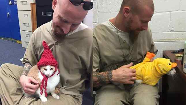 presidiários adotam animais