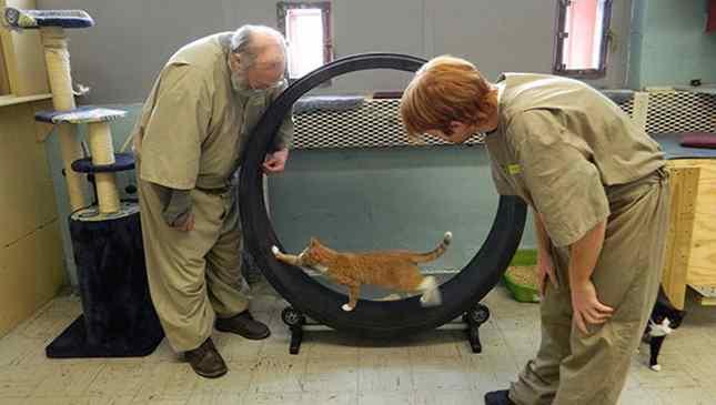 projeto no presídio animais