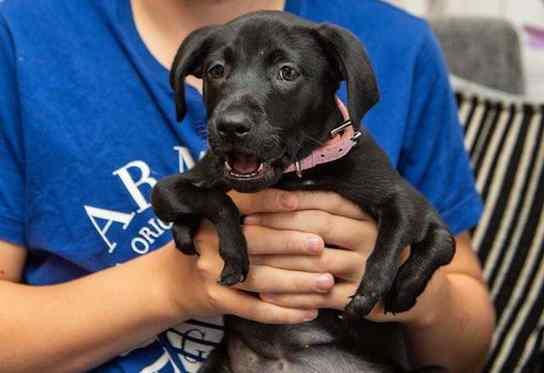 cachorrinha com 6 patas foi adotada