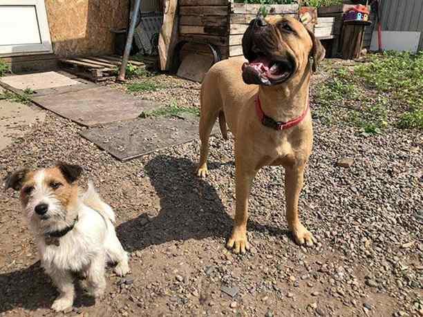 cachorrra foi resgatada