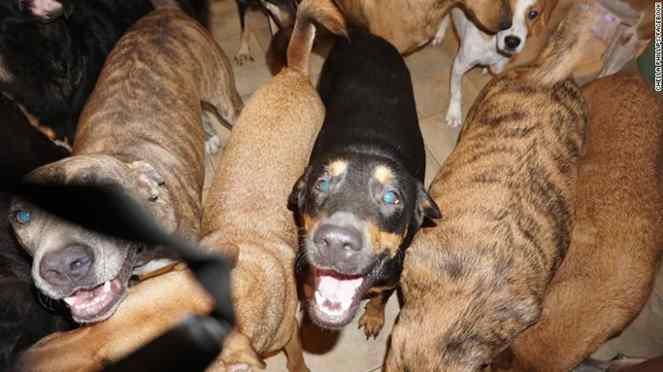 cães retirados das ruas