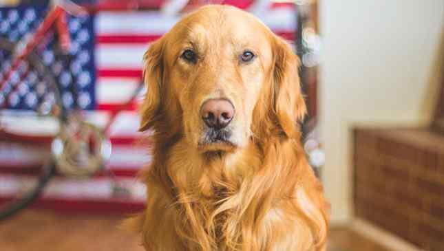 morte de cães na Noruega