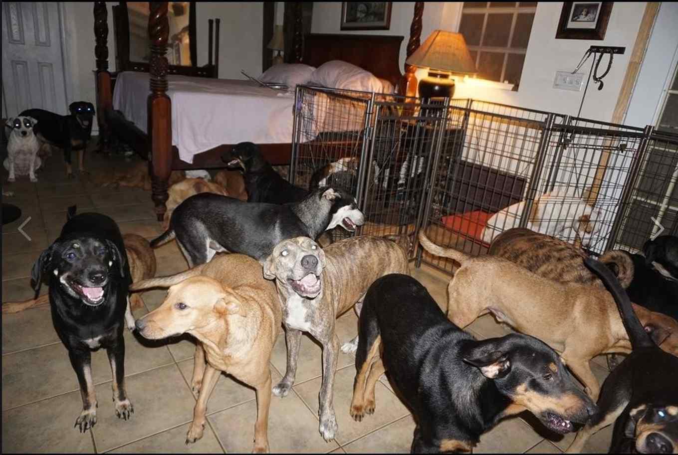 cachorros furacão dorian