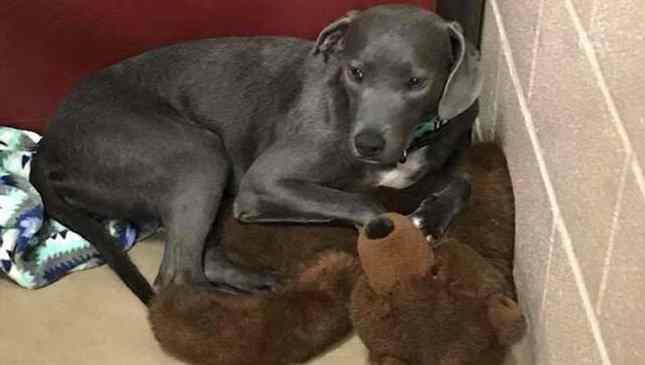 cadela abandonada em abrigo