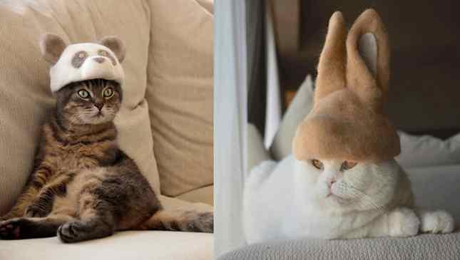 chapéus feitos com pelos de gato