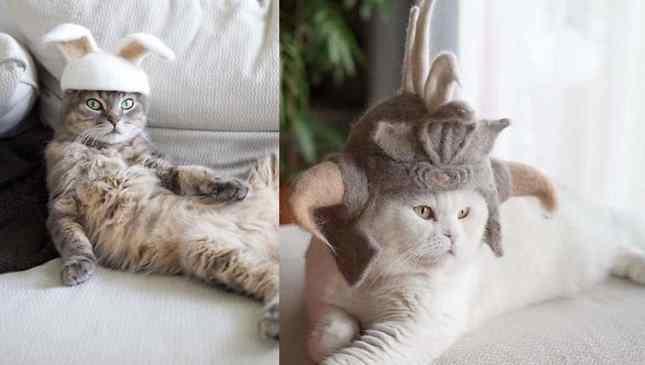 gorros para gatos