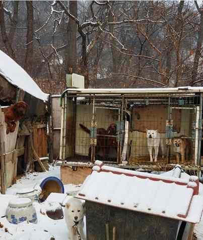 resgate de cães da Coreia do Sul