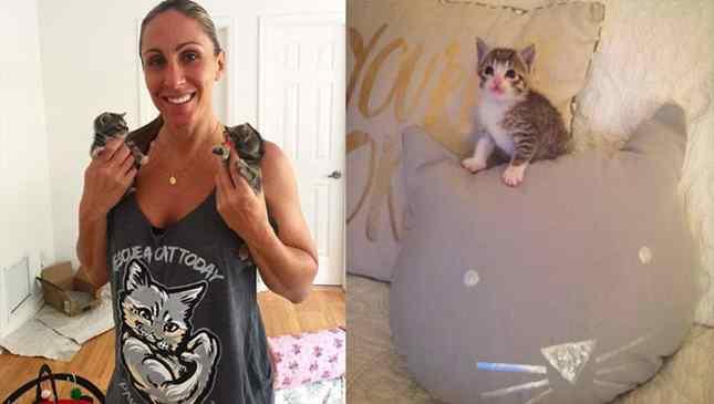 policial salva gatos abandonados