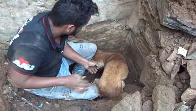 cadela filhotes enterrados