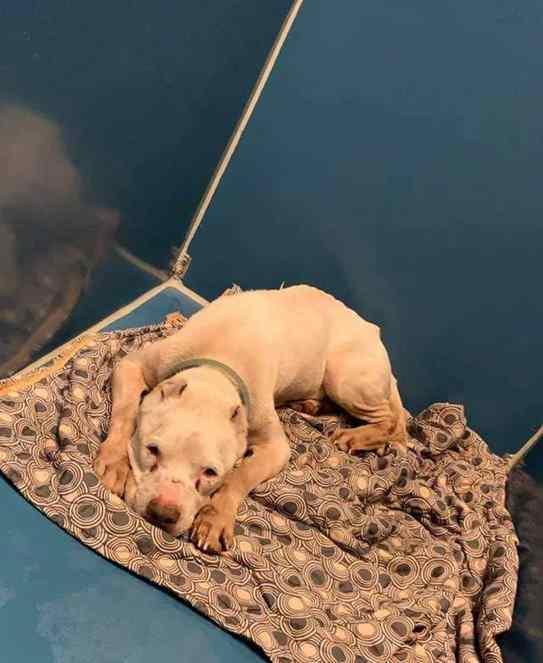 cão idoso resgatado