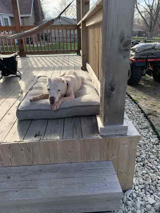 cão foi resgatado das ruas