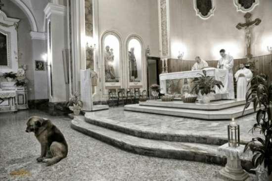Cachorro vai à missa todos os dias após morte da dona