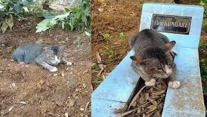 Gata vive sobre túmulo da dona morta mesmo após ser adotada por outra pessoa