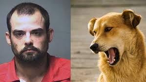 Homem mordeu cachorro policial e foi preso